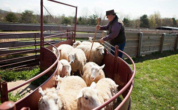 Livestock farming involves