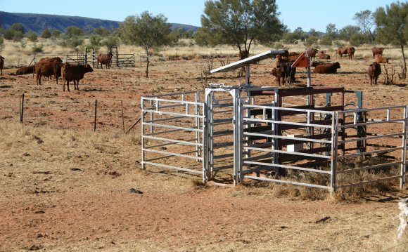 Remote livestock management