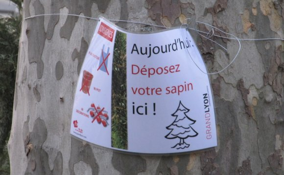 Christmas tree drop off point