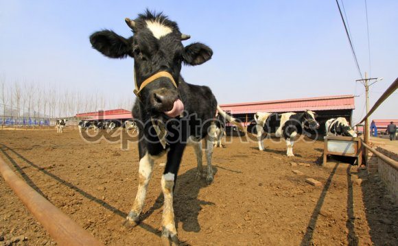 Livestock breeding industry