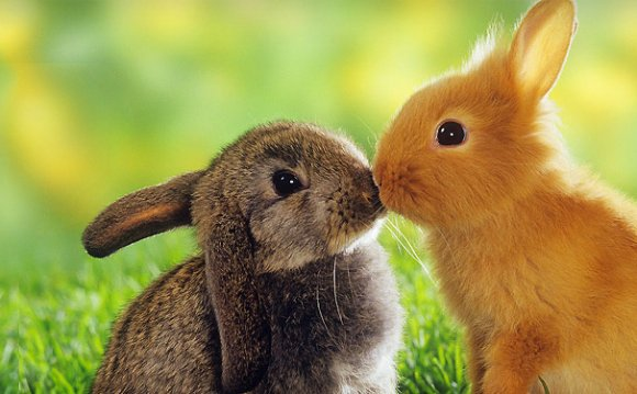 Cute-bunnies-on-grass