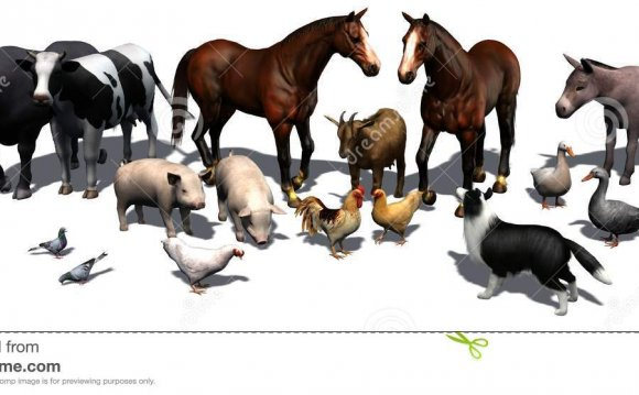 Different Farm Animals
