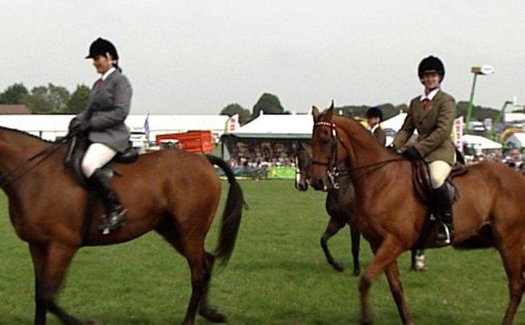 Horses | Dorset County Show