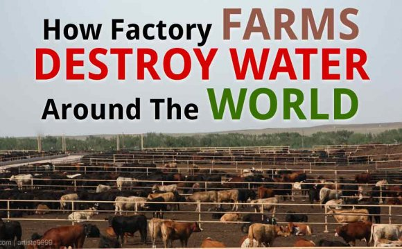 How Factory Farms Destroy