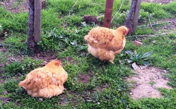 Live farm animals at the
