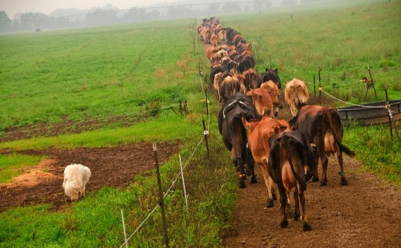 Livestock[edit]