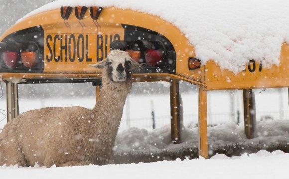 A llama sits atop an abandoned