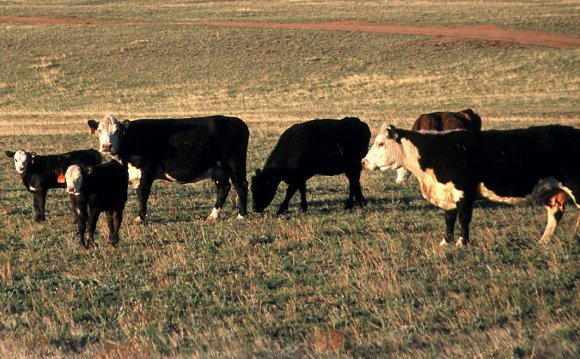Beef production convention set