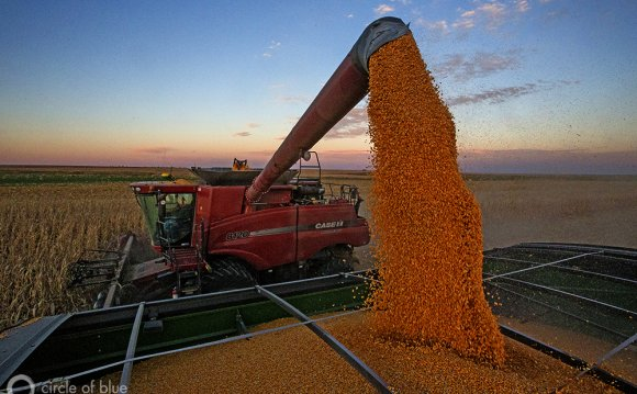 Grain is the economic fulcrum