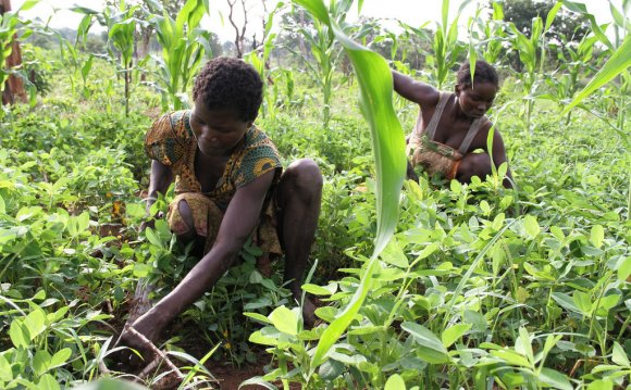 Farming sector hit by