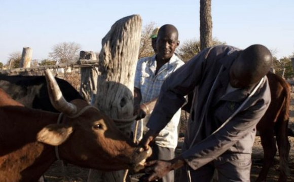 Zimbabwe farmers benefit from