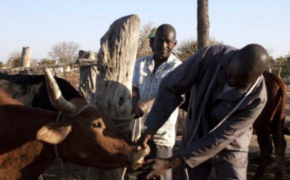 Zimbabwe farmers benefit from