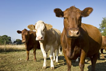 Breaking News: Bill in Congress Proposes End to Farm Animal Torture at Federal Labs