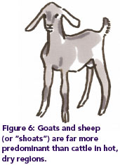 "Figure 6: Goats and sheep (or ""shoats"") are far more predominant than cattle in hot, dry regions."