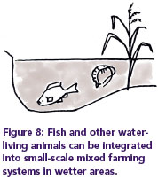 Figure 8: Fish and other water-living animals can be integrated into small-scale mixed farming systems in wetter areas.