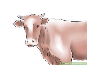 Image titled Start a Cattle Farm Step 6