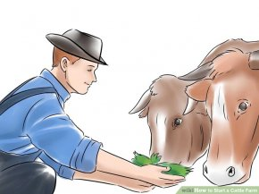 Image titled Start a Cattle Farm Step 8