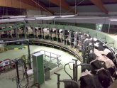 Factory Dairy farms