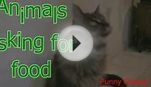 Animals asking for food Funny and cute animal compilation1