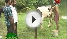 Bhoomigeetham: Cattle farming- The case study of Ratheesh (3)