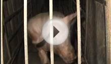 Canadian Government: Ban Animal Factory Farming