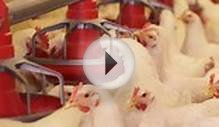 Factory Farming & Food Safety