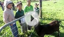 Feeding the Farm Animals at Springhill Farm Part 5