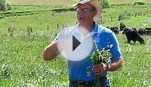 Joel Salatin of Polyface Farms discusses grass-fed cattle