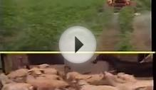 Model Livestock Farm Punjab Pakistan part-1 Dr.Ashraf