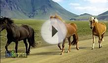 Spanish farm animals. Learn the name of farm animals in