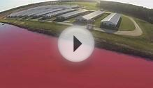 This Guy Exposes Factory Farms Using A Drone. This Is What