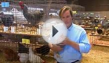 Types of Chickens | Farm Raised Classics With P. Allen Smith
