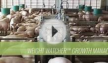 Weight Watcher Growth Management System and Pig Scale