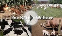 What is Animal Welfare