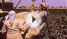 Working Conditions in California Farming 1959